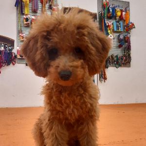 Bild von Studienteilnehmerhund Caramella
